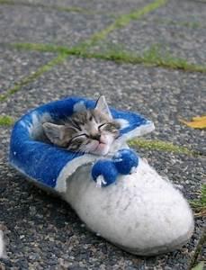 15 Really Cute Kittens   Kitty Bloger