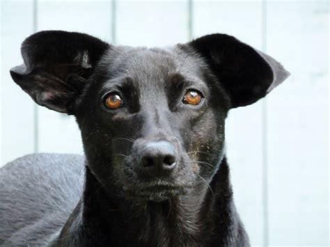 black dog  san pancho  pet sitters post