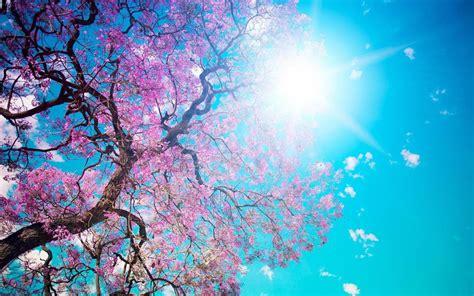 desktop wallpapers spring scenes  background pictures