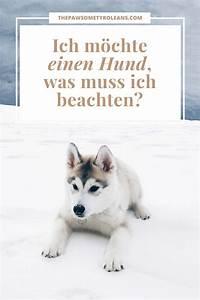 Ich Suche Einen Großen Hund : ratgeber ich m chte einen hund was muss ich beachten ~ Jslefanu.com Haus und Dekorationen