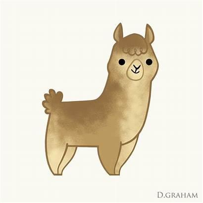 Alpaca Drawing Animation Drawn Pencil Daryl Graham