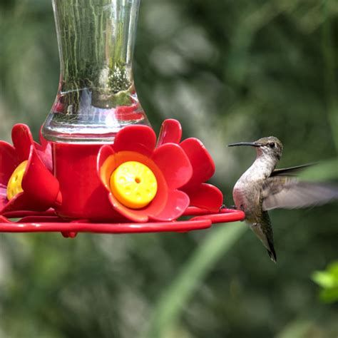 monitor sugar water levels in your hummingbird feeder
