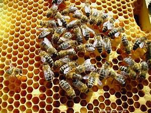 Bienen Vertreiben Essig : honig geschichte produktion und geheimnisse artimondo magazine ~ Whattoseeinmadrid.com Haus und Dekorationen