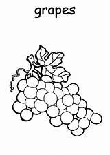 Grapes Coloring Fruit Plantation Colorluna sketch template