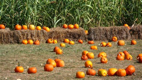 Fall Backgrounds Pumpkins by Pumpkins Backgrounds Wallpaper Cave