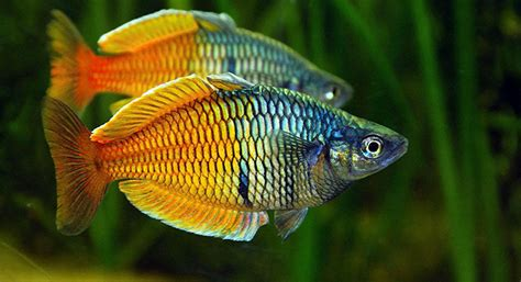 aquariums the finest quality aquarium livestock