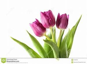 Tulips Royalty Free Stock Photos - Image: 37259618