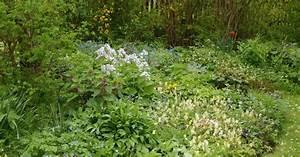 Was Blüht Jetzt Im Garten : storchschnabel und andere stauden im schatten bl ht es ~ Lizthompson.info Haus und Dekorationen