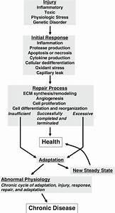 Theoretical Schema For The Pathogenesis Of Chronic Kidney