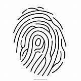 Fingerprint Coloring Clipart Simple Transparent Prints Webstockreview sketch template