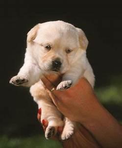 Ich Suche Einen Großen Hund : ich will einen hund was ist zu beachten hunde ~ Jslefanu.com Haus und Dekorationen