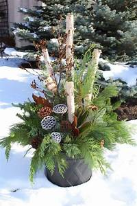 20, Best, Colorful, Winter, Plants, Ideas, To, Perfect, Your, Home