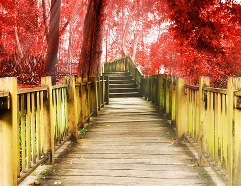 miscellaneous track stairs degree  step tree red