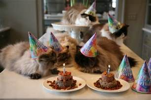 cat birthday cats in birthday hats a million inches delicious