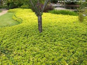 Garden Ground Cover Plants