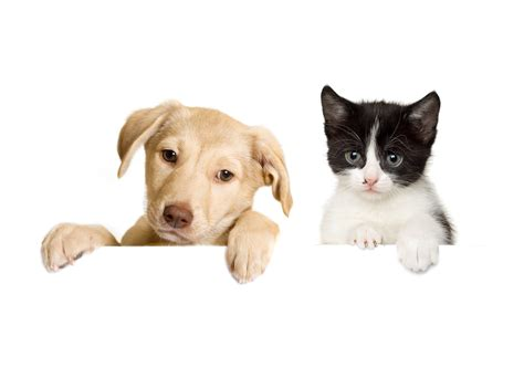 Happy Wallpaper Cats And Dogs by Cat And Wallpapers High Quality Free