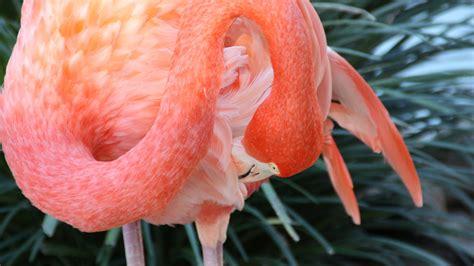 wallpaper flamingo hd  wallpaper sun diego zoo bird