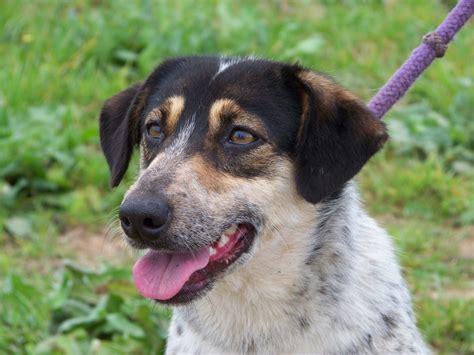 large dogs   adoption uitsig animal rescue