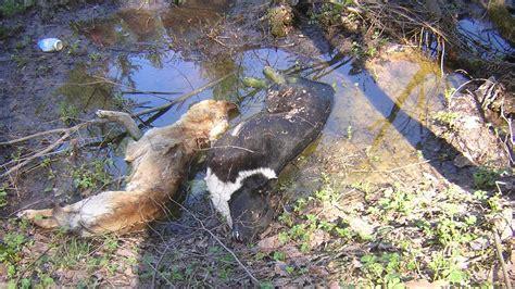petitsiya  attorney general  russia dog slaughter