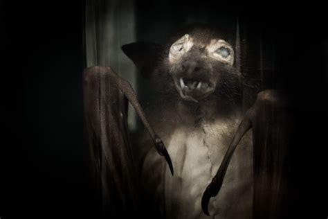 spooky bat  stock photo public domain pictures