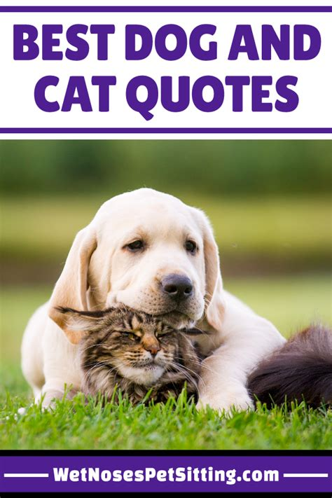 Best Dog And Cat Quotes Wet Noses Pet Sitting