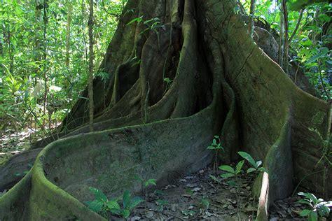 idee cuisine d ete la forêt amazonienne recherche voyage