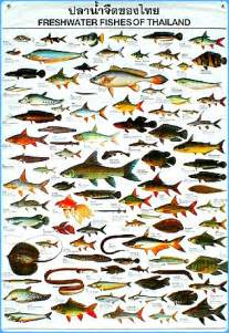 Freshwater River Fish Species