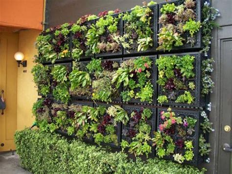 vegetable garden wall gardening ideas