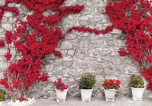 Mur De Fleurs : mur de pierre aux fleurs rouges poster mural papier peint acheter le sur ~ Farleysfitness.com Idées de Décoration