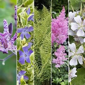 Plantes Et Jardin : kit de vivaces jardin d 39 ombre plantes et jardins ~ Melissatoandfro.com Idées de Décoration