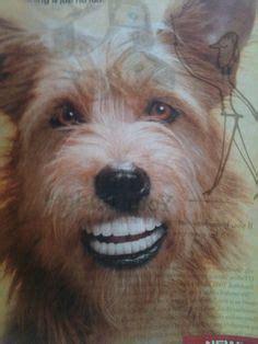 similiar dog with dentures smiling keywords