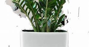 Piante da appartamento poca luce Piante appartamento Luce per le piante da appartamento