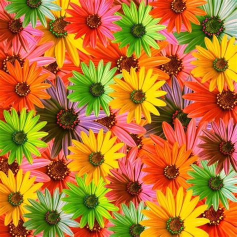 big colorful flowers flower background free stock photos download 18 526 free stock photos for commercial use