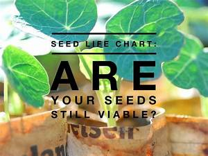 Seed Life Chart  How Long Will Seeds Last