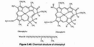 Chlorophyll: Chemical Structure and Absorption Spectra ...