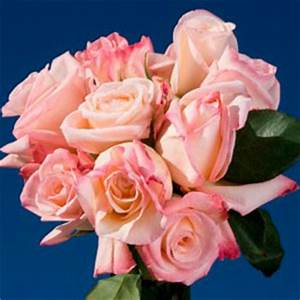 Cheap White Roses with Pink Tips | Global Rose