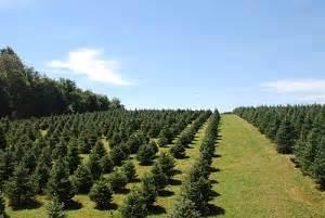baltimore  central maryland christmas tree farms