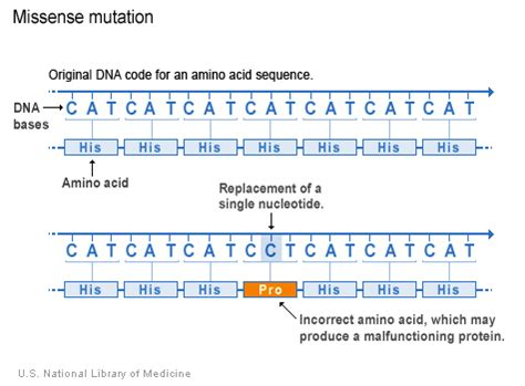 the wikitext you entered doesn t contain a valid license template difference between missense and nonsense mutation