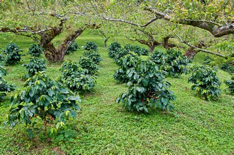 See houses, villas and apartments from the leading agents in south africa on a 100 hectares of prime land on the border of the fastest developing part of pretoria south africa promise to be a jewel for developers. Ethiopia Natural Sidamo FTO for Sale | Green Coffee Beans