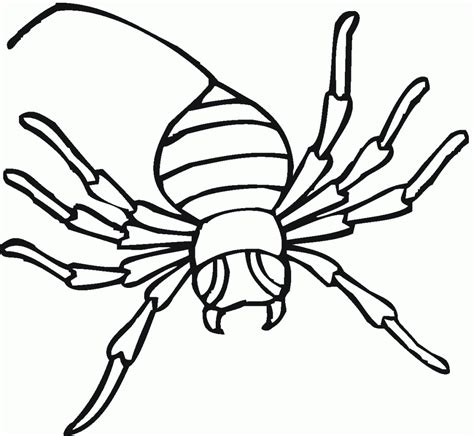 Black Widow Spider Drawing At Getdrawingscom Free For