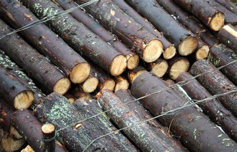 Slapjā laika dēļ mežizstrādātāji lūdz nozarē izsludināt ...