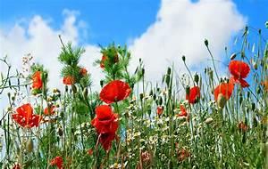 Red Flower Garden HD wallpaper