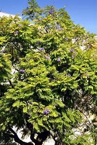 Baum Mit Blüten : olhao algarve bilder einer portugal reise ~ Frokenaadalensverden.com Haus und Dekorationen