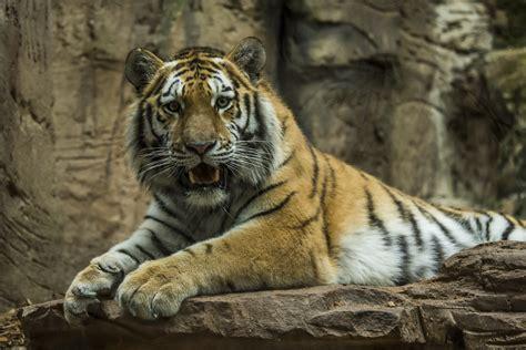 Zeit Zum Chillen Foto & Bild  Tiere, Zoo, Wildpark