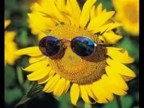 happy birthday sunflowers youtube