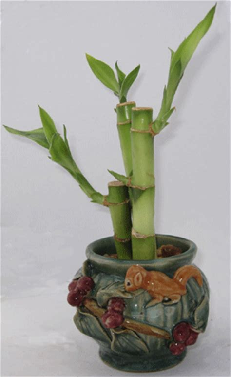 Wholesale Lucky Bamboo Vases