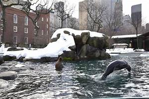 Winter Is A Perfect Time To Visit The Central Park Zoo