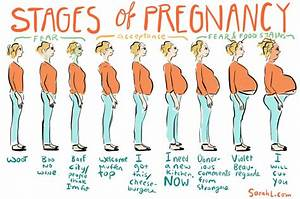 Stages Of Pregnancy   Babybumps