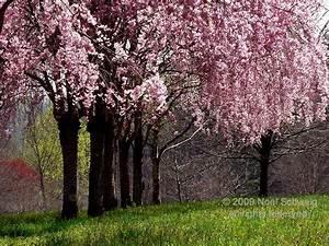 Nature, Noel Schweig Fine Art Photography