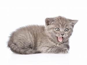 Weißer Wurm Katze : bilder von katzenjunges katze zunge tiere wei er hintergrund ~ Markanthonyermac.com Haus und Dekorationen